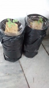 Hydroponics used plastic bottle